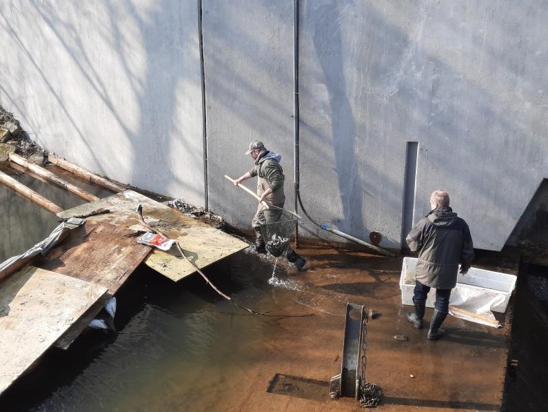 Abfischen Tosbecken Aa-See auslauf Königsmühle (12)